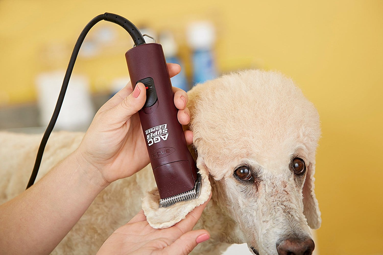 Best-Dog-Grooming-Kit