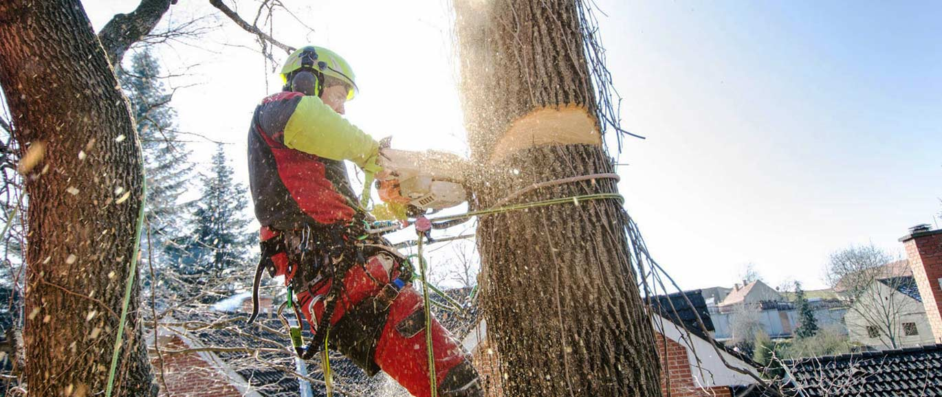 monster tree service coupon