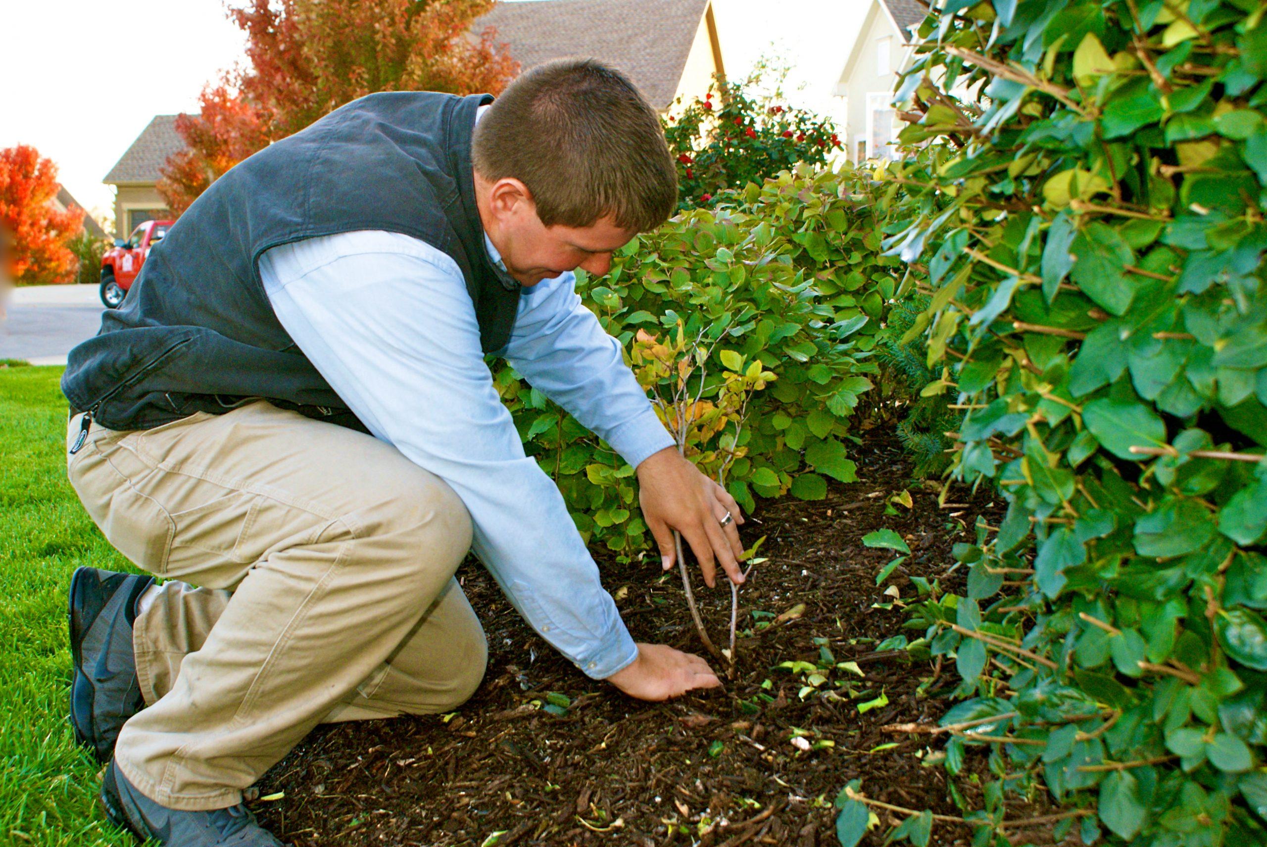 Self-Mulching-In-Lawn